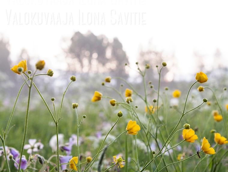 _MG_6083blogi