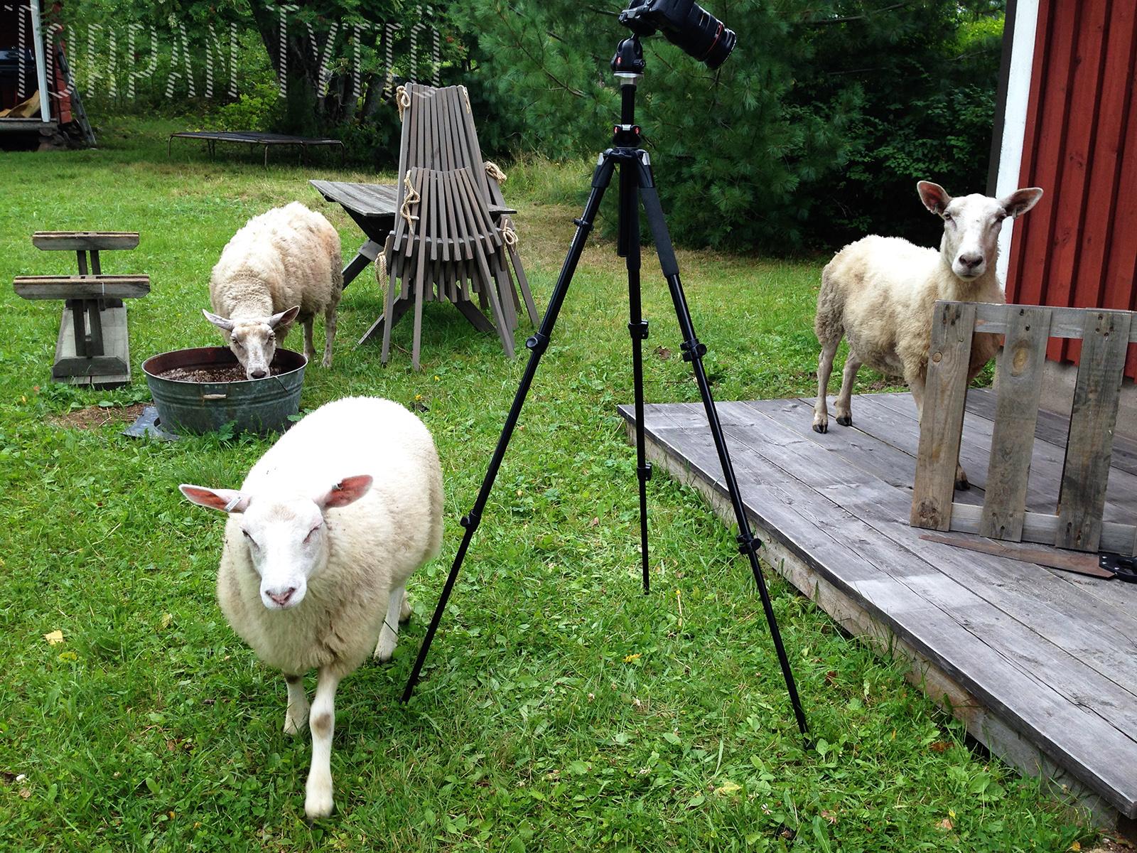 lampaat auttaa