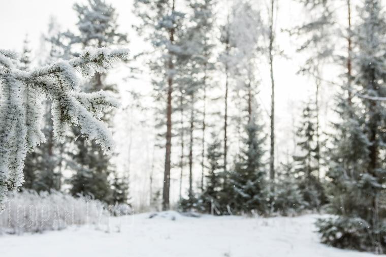 luminen-metsa