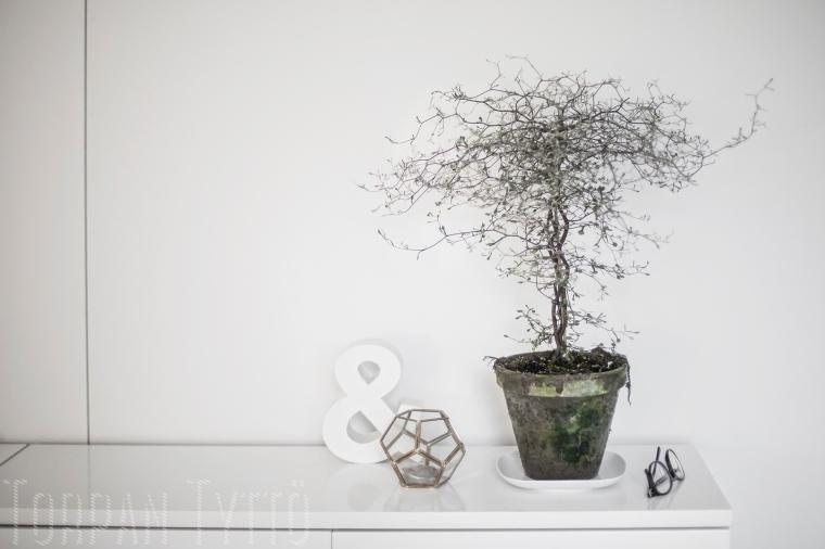 Kummituspuu 2