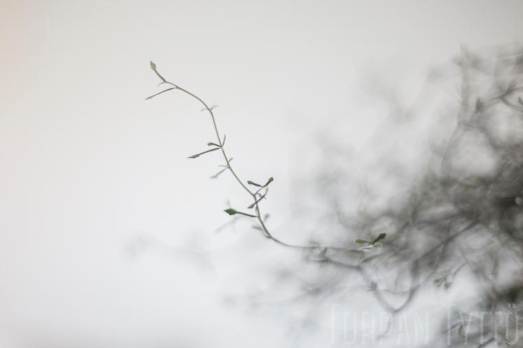 Kummituspuu 3