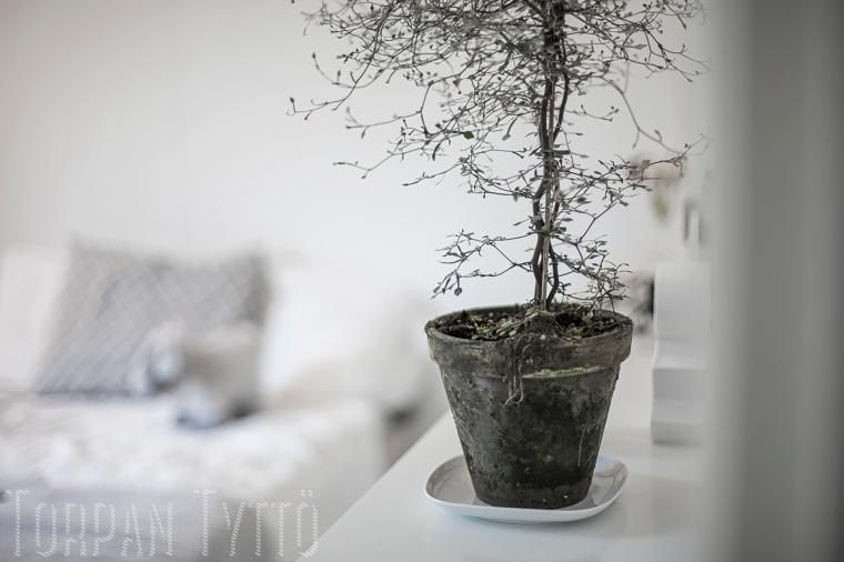Kummituspuu 4