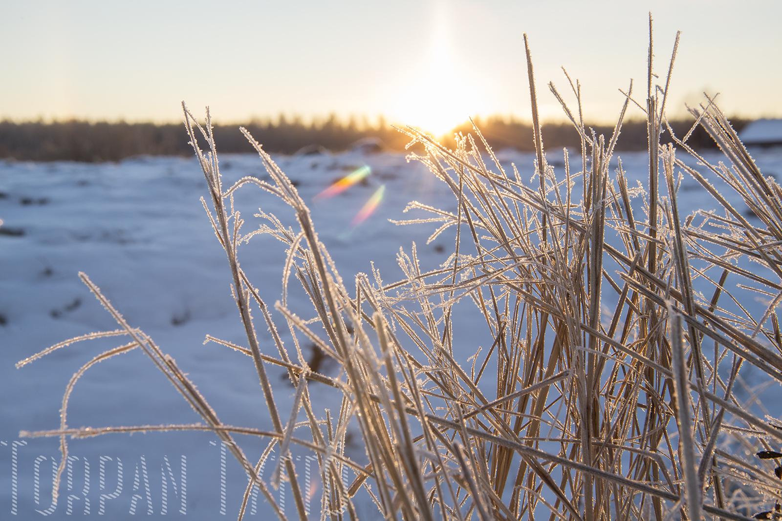Talvi maalla