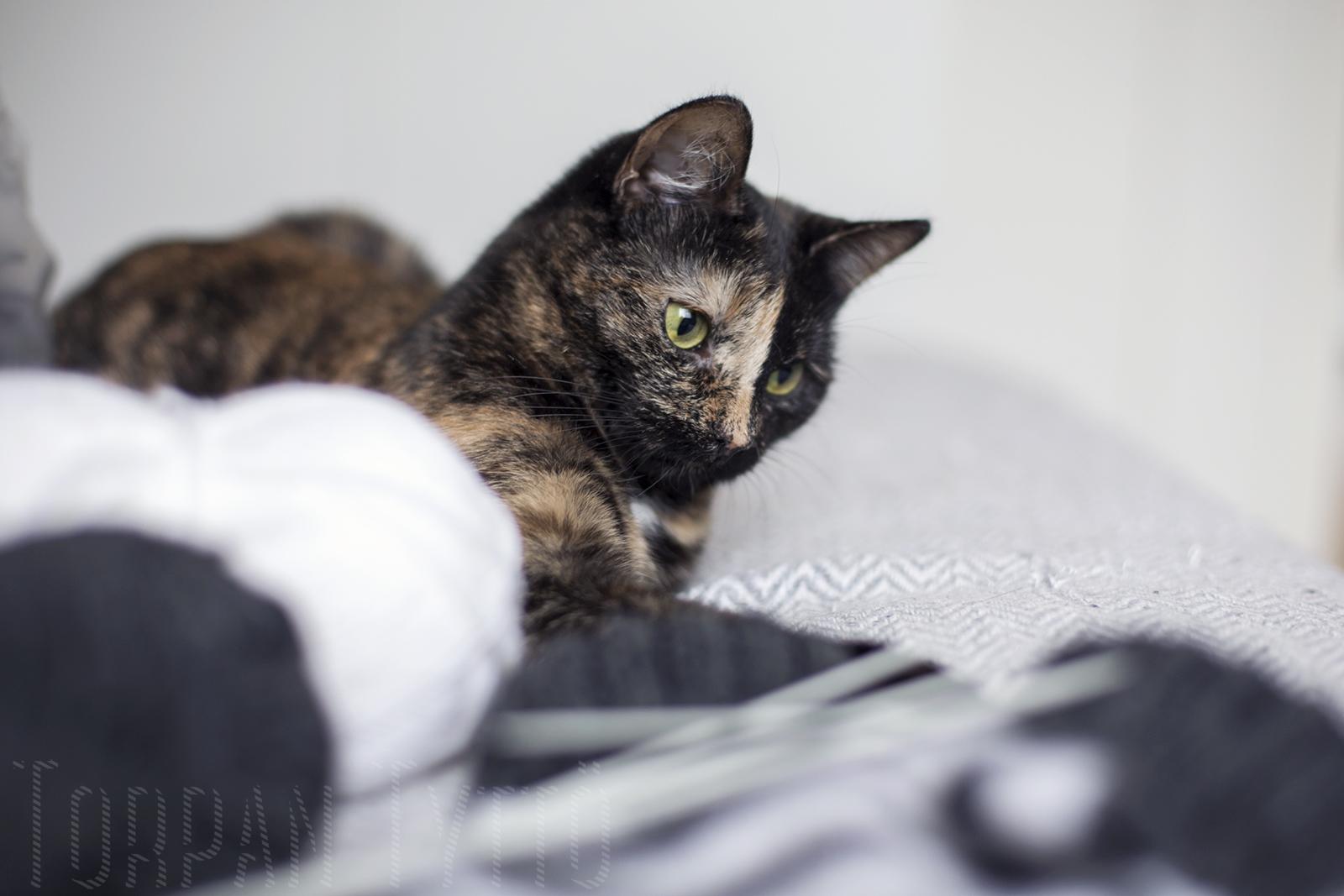 Kissa ja langat