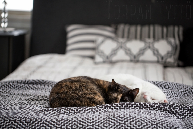 Kissat nukkuu