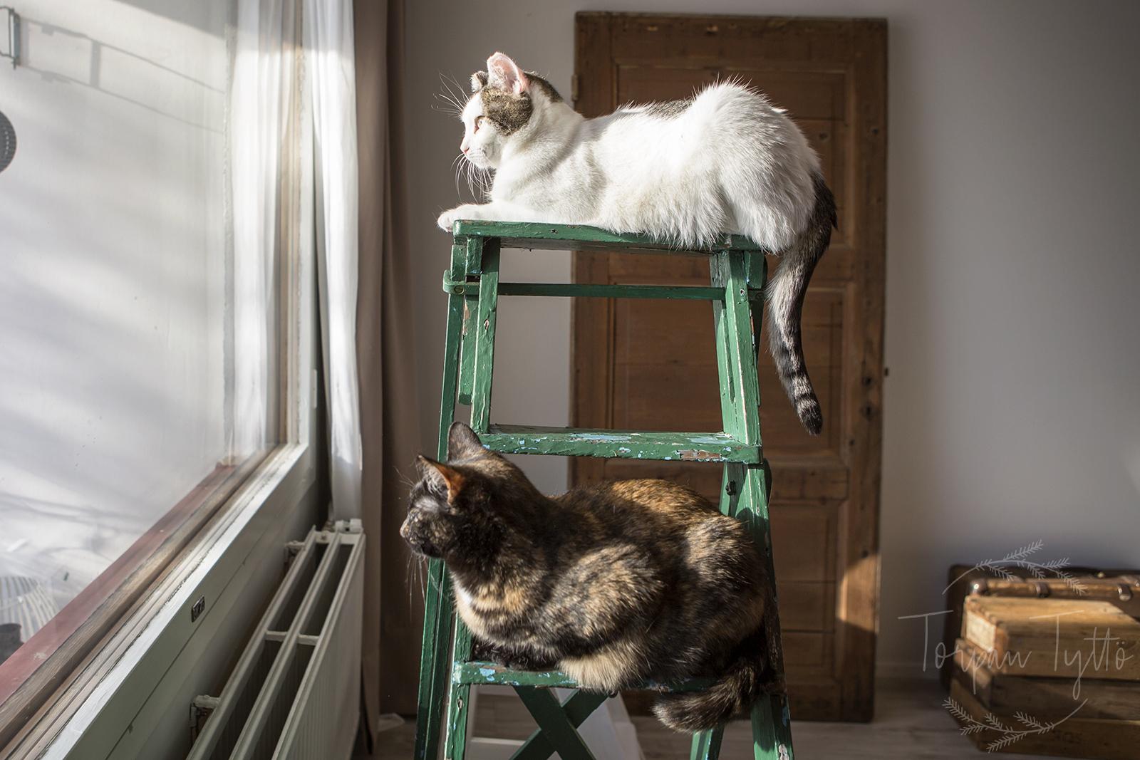 Kissat vahtii